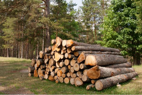 Viktigt att ta ner sjuka träd